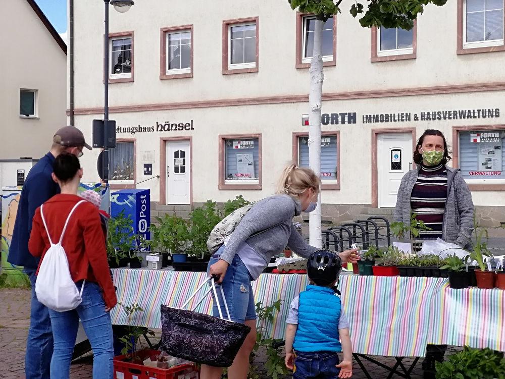 Pflanzentauschbörse auf dem Marktplatz in Taucha im Mai 2021